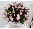 bouquet of pink spray carnations
